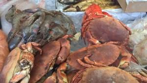 Cromer crab, crabs, norfolk, zoo
