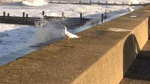 Walcott; seabirds; Norfolk; Holidays