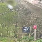 Garden Open, Felbrigg walled Garden, Norfolk