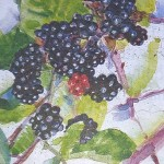 Blackberries, autumn, norfolk, holidays