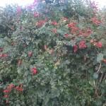 Norfolk; B&B; Barn & Beach; buds n Berries
