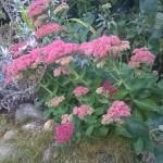 Autumn Border; Flora; Norfolk Holidyays